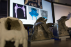 Jawbones of various mammals are on display during the FAVE lab's presentation for National Biomechanics Day.