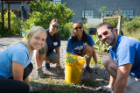 From left, medical students Sara Armstrong, Erin Clough, Weilin Chan and John Traversone remove weeds from the Pelion Community Garden during the Medical Student Day of Service.
