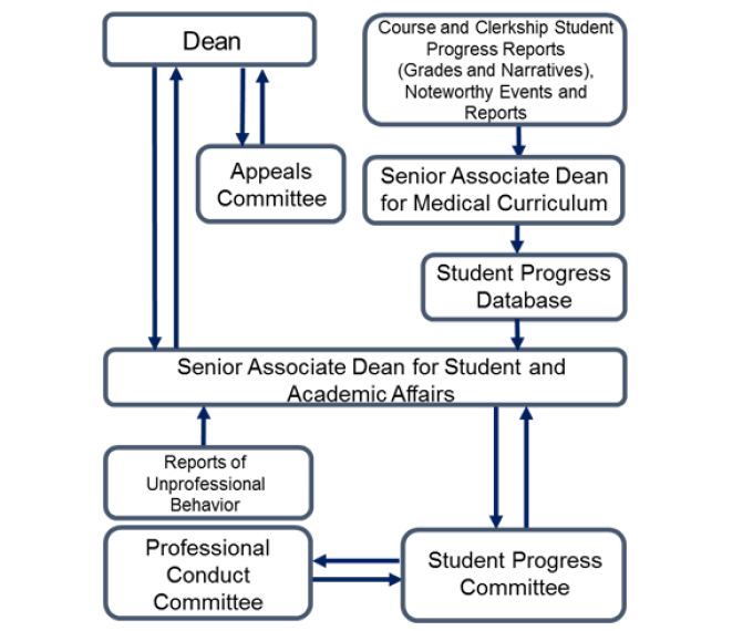 The chart is a graphic depiction of the oversight of student academic and professional development in years 1 to 4. Course and clerkship student progress reports (grades and narratives), noteworthy events and reports go to the Senior Associate Dean for Medical Curriculum who is responsible for ensuring that the relevant information is entered in the student progress database for review by the Senior Associate Dean for Student and Academic Affairs. The Senior Associate Dean for Student and Academic Affairs reports substandard student performance and any reports of unprofessional behavior by students to the Student Progress Committee. Cases of unprofessional behavior are referred to the Professional Conduct Committee which reports findings back to the Student Progress Committee. A report of the findings and conclusions of the Student Progress Committee will be forwarded to the Senior Associate Dean for Student and Academic Affairs who will take the action(s) specified in the Committee's report. A student may appeal any action to the Dean. When a request for an appeal is granted, the Dean may refer the appeal to the Appeals Committee, which reports recommendations to the Dean.