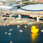 Largest rubber duck at Canalside.